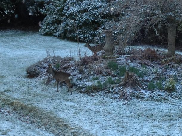 IMG_0925 deer