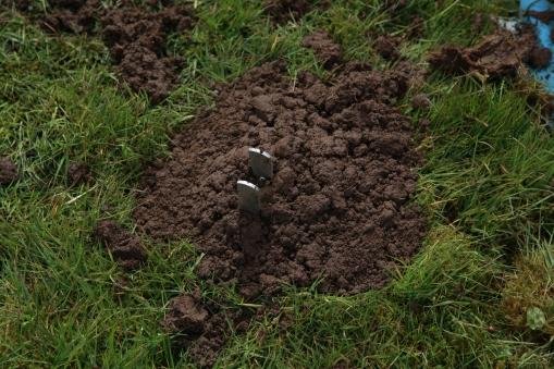 _MG_9303 mole trap