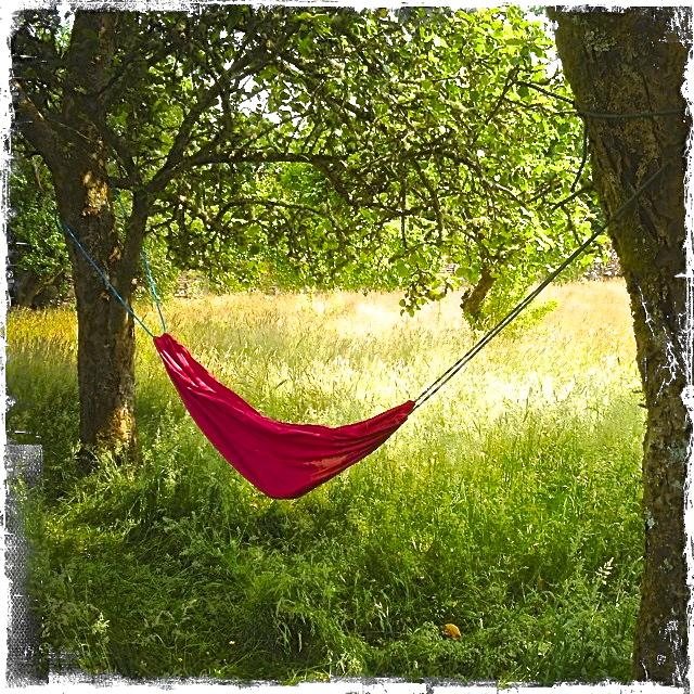 IMG_1536 hammock